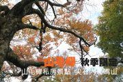 山毛櫸 秋季限定 山毛櫸私房景點  尖石內鳥嘴山