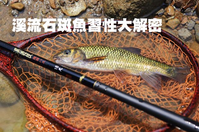 溪流石斑魚習性大解密溪流石斑魚習性大解密