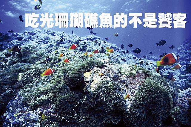 吃光珊瑚礁的魚不是饕客吃光珊瑚礁的魚不是饕客