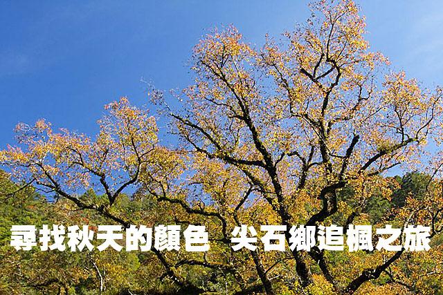 尖石鄉追楓之旅 尋找秋天的顏色尖石鄉追楓之旅 尋找秋天的顏色