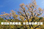 尖石鄉追楓之旅 尋找秋天的顏色