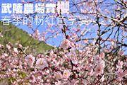 武陵農場賞櫻 春季的粉紅色享宴