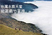 台灣水鹿天堂—能高箭竹草原