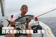刺激震撼的西式毛鉤VS黃鰭鮪、鰹魚